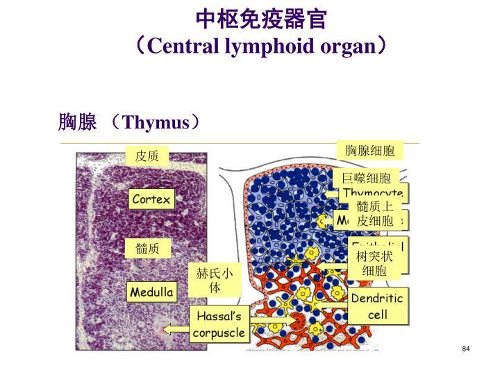 中枢免疫器官