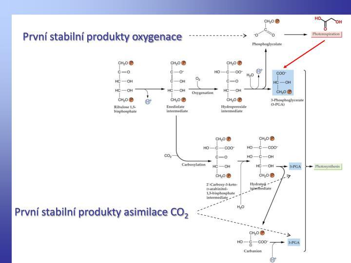 První stabilní produkty oxygenace