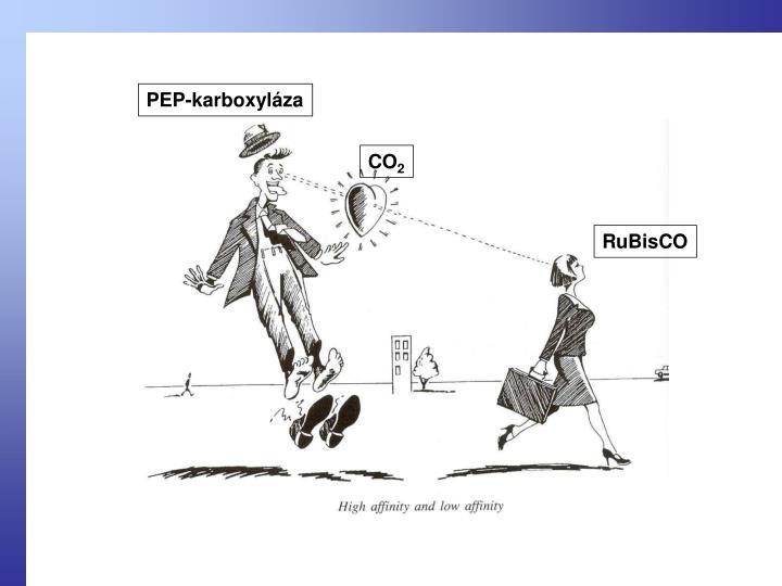 PEP-karboxyláza