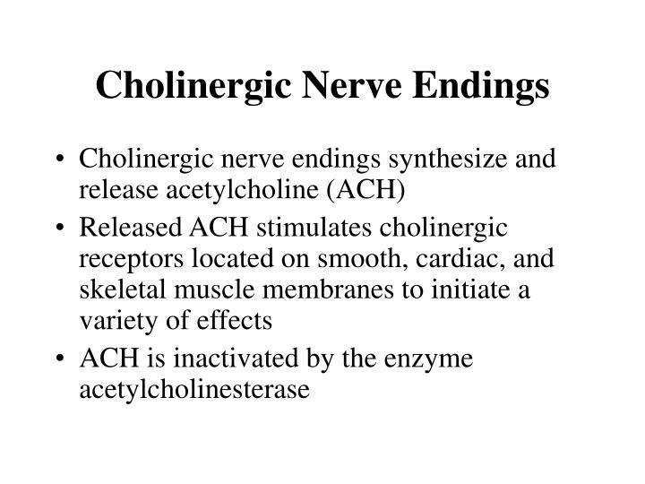 Cholinergic Nerve Endings