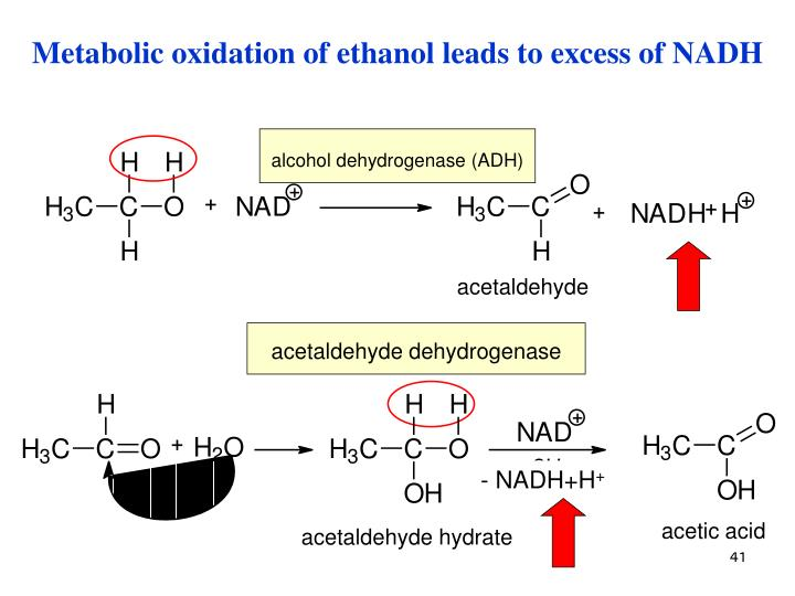 Metabolic oxidation of ethanol leads to excess of NADH