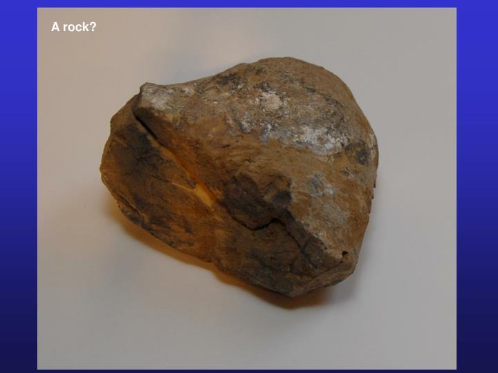 A rock?