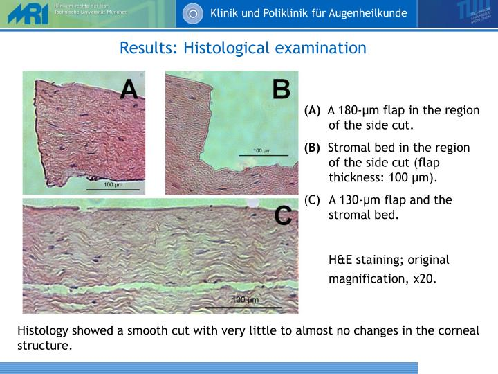 Results: Histological examination