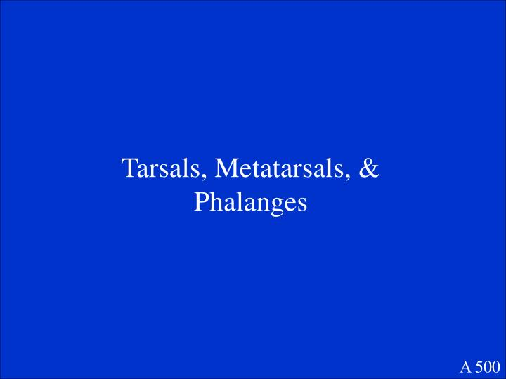 Tarsals, Metatarsals, & Phalanges