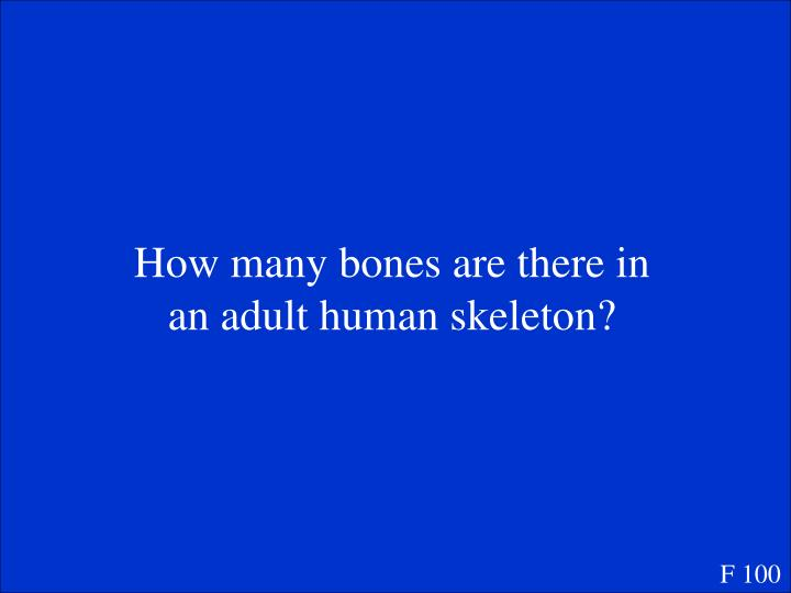 How many bones are there in an adult human skeleton?