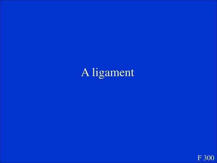 A ligament