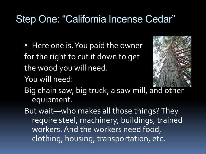"Step One: ""California Incense Cedar"""