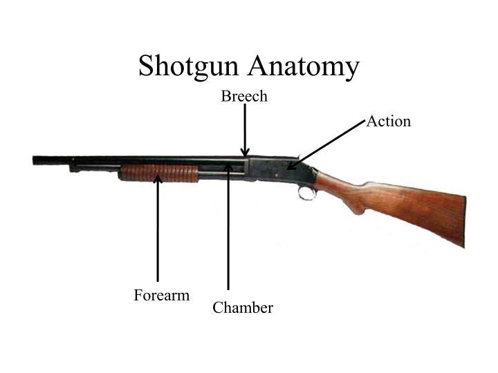 Shotgun Anatomy