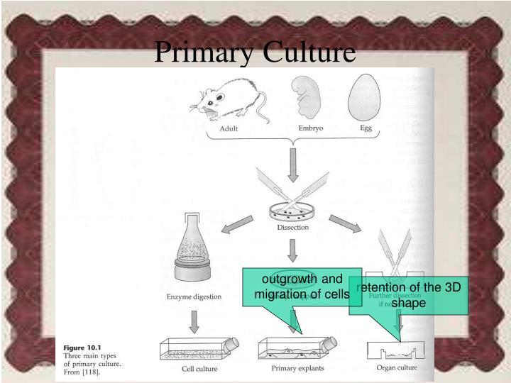 Primary Culture