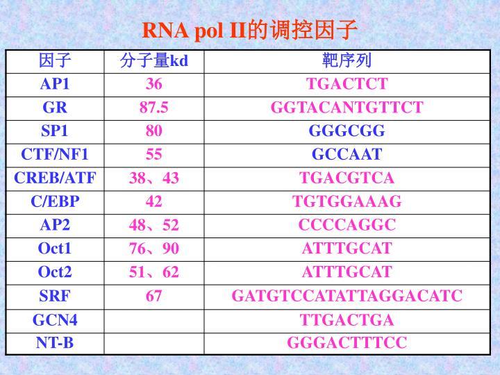 RNA pol II