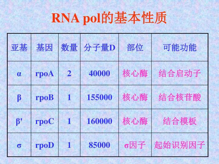 RNA pol