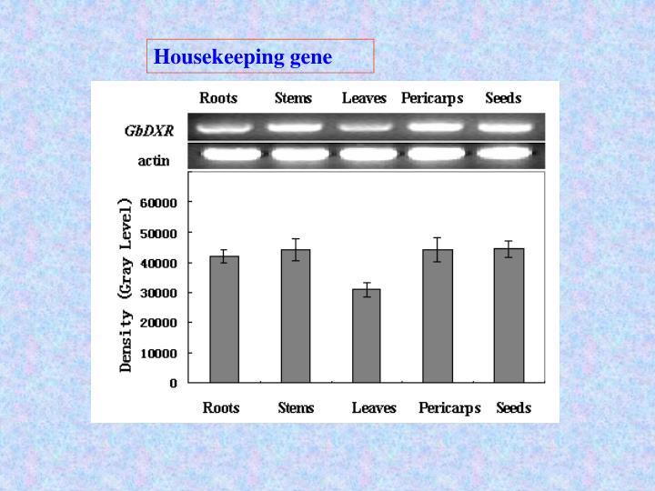 Housekeeping gene