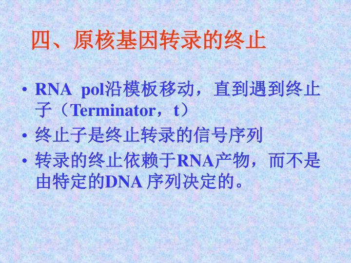 四、原核基因转录的终止