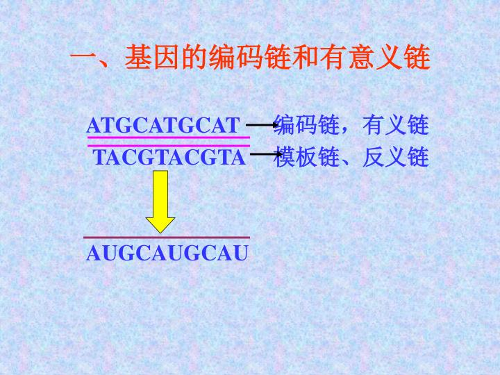 一、基因的编码链和有意义链