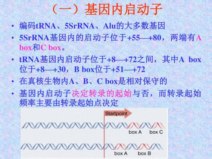 (一)基因内启动子