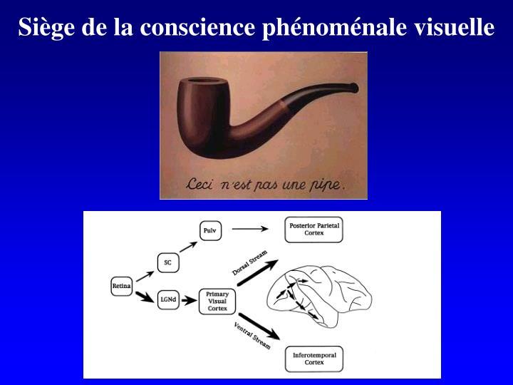 Siège de la conscience phénoménale visuelle