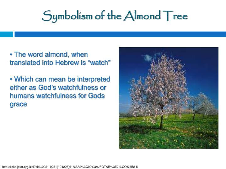 Symbolism of the Almond Tree