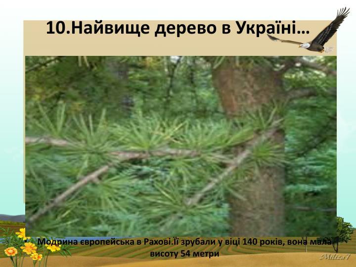10.Найвище дерево в Україні…