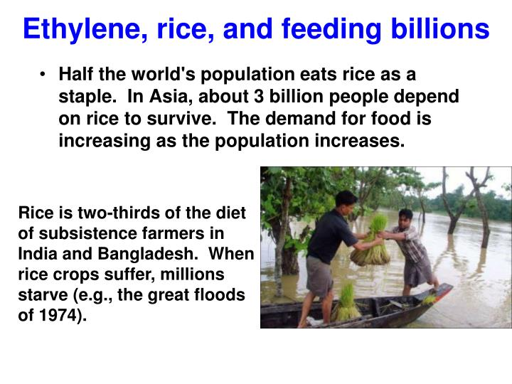 Ethylene, rice, and feeding billions