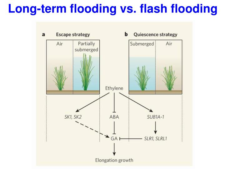 Long-term flooding vs. flash flooding