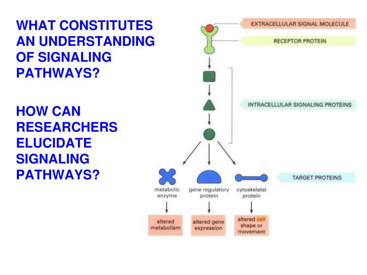 WHAT CONSTITUTES AN UNDERSTANDING OF SIGNALING PATHWAYS?