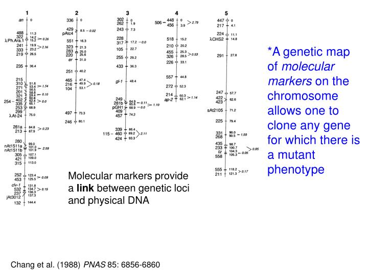 *A genetic map of