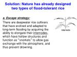 solution nature has already designed two types of flood tolerant rice