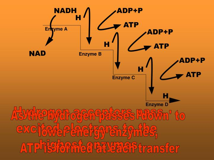 ADP+P