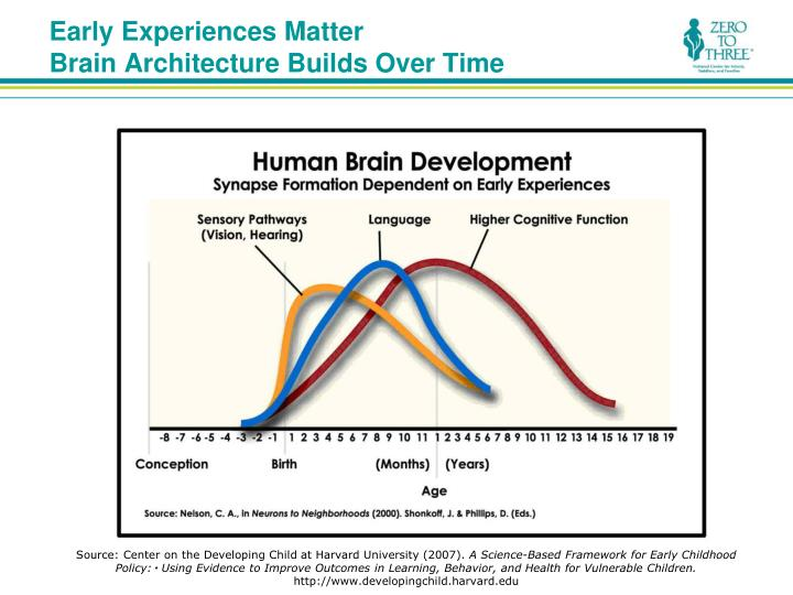 Early experiences matter brain architecture builds over time