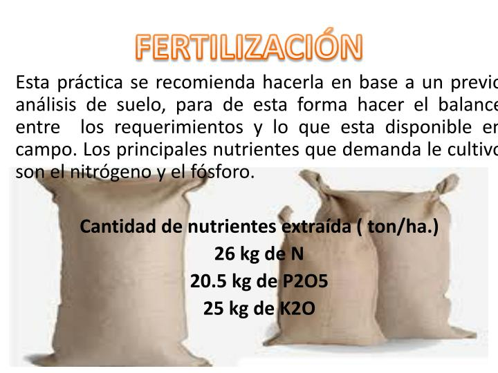 FERTILIZACIÓN