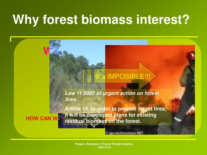 Why forest biomass interest?