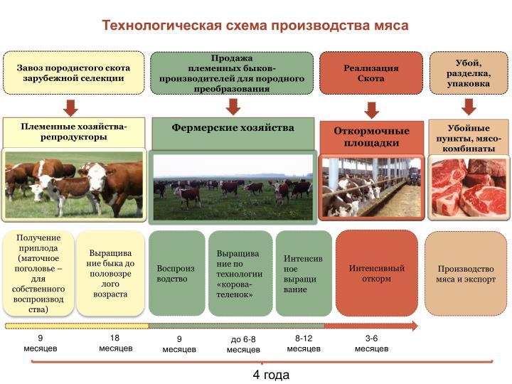 Технологическая схема производства мяса