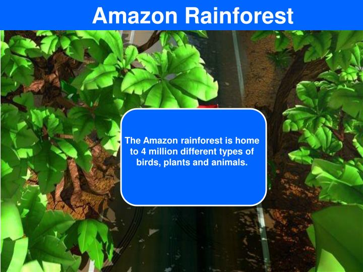 The Amazon rainforest is home to 4 million different types of birds, plants and animals.