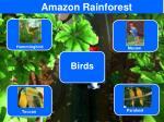 amazon rainforest2