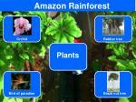 amazon rainforest3
