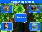 amazon rainforest4