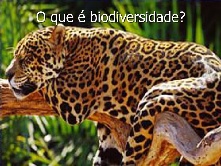 O que é biodiversidade?