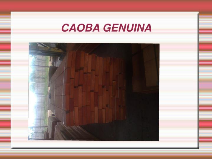 Caoba genuina