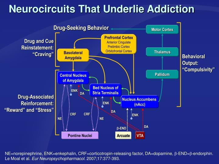 Neurocircuits That Underlie Addiction