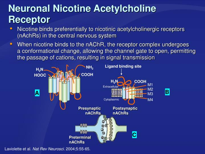 Nicotine binds preferentially to nicotinic acetylcholinergic receptors (nAchRs) in the central nervous system