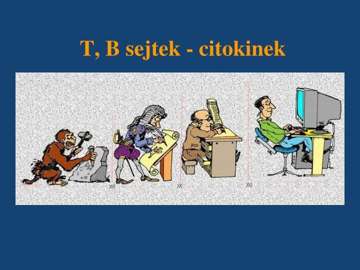 T, B sejtek - citokinek