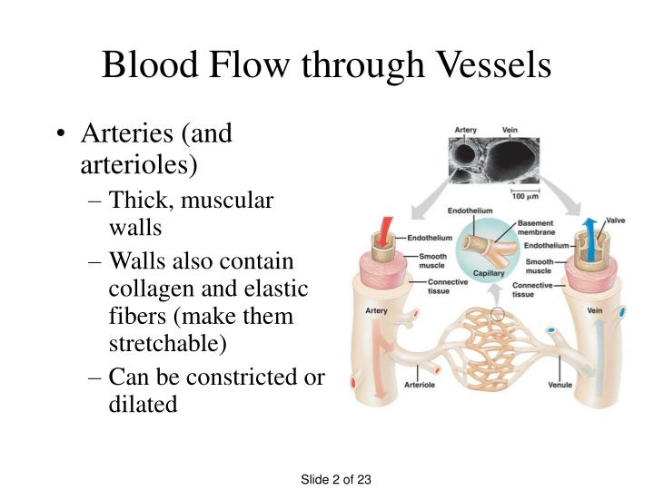 Blood flow through vessels