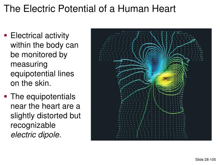 The Electric Potential of a Human Heart