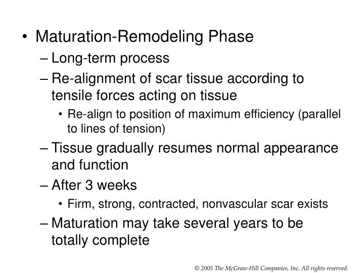Maturation-Remodeling Phase