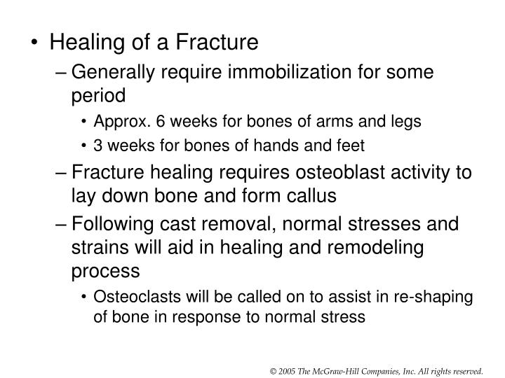 Healing of a Fracture
