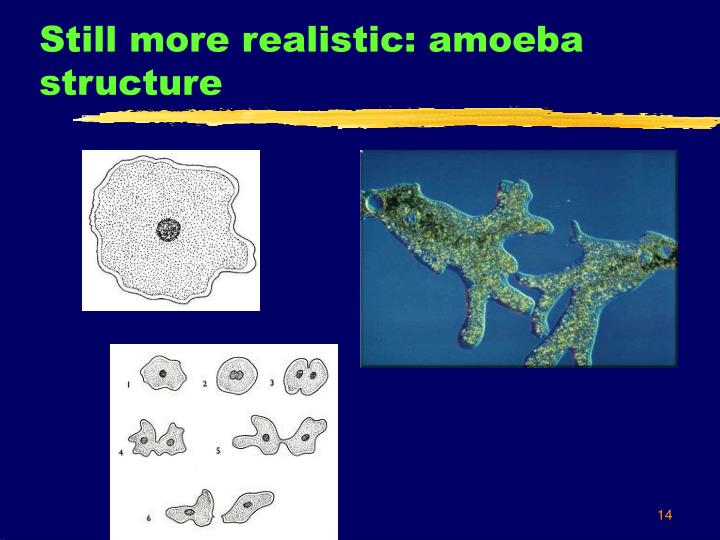 Still more realistic: amoeba structure