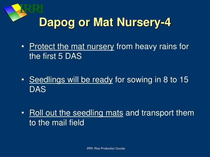 Dapog or Mat Nursery-4