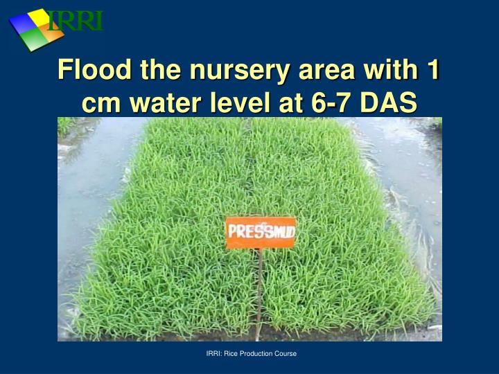 Flood the nursery area with 1 cm water level at 6-7 DAS