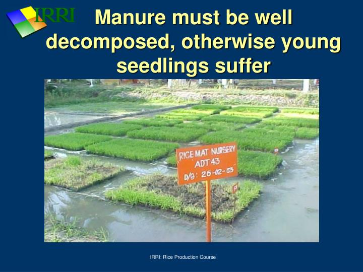 Manure must be well decomposed, otherwise young seedlings suffer