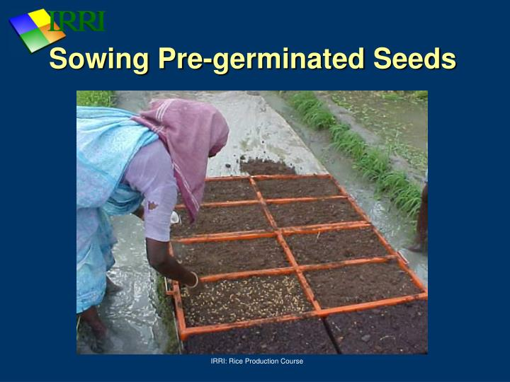Sowing Pre-germinated Seeds